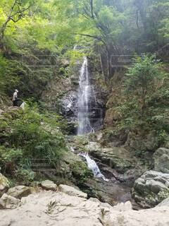 自然,森林,屋外,水面,滝,樹木,渓谷,草木,山腹,ガリー,カスケード