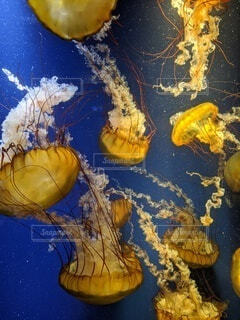 海,水族館,水中,癒し,たくさん,江ノ島,クラ ゲ