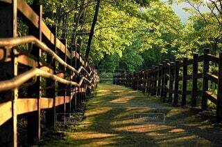 自然,風景,公園,秋,夕日,屋外,夕方,木漏れ日,樹木,フェンス,草木,7月,旭川,スロープ,嵐山公園