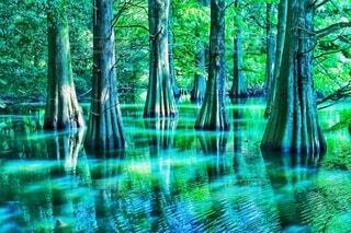 木のクローズアップの写真・画像素材[4838764]