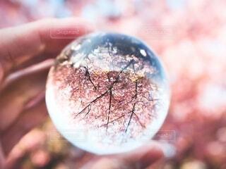 春,桜,手,旅行,三浦海岸,レンズボール,逆さまの世界