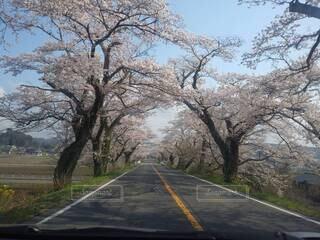 空,花,春,屋外,草,樹木