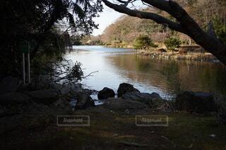 自然,屋外,湖,川,水面,池,草,樹木