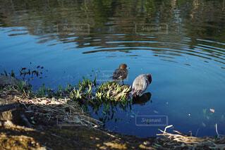 仲良しな野鳥の写真・画像素材[4183880]