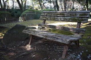 公園,屋外,ベンチ,テーブル,樹木,座る,家具,地面,木目