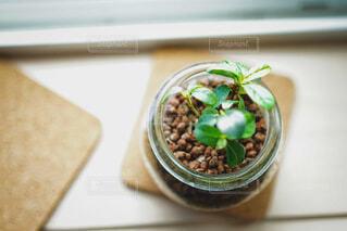 食べ物,コーヒー,屋内,テーブル,果物,健康的,植木鉢,観葉植物,草木,トレイ