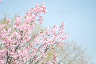 近くの花のアップの写真・画像素材[1110275]