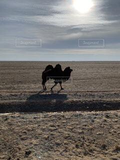 風景,空,動物,鳥,屋外,砂浜,海岸,景色,砂漠,ラクダ,馬,地面,日中,開く