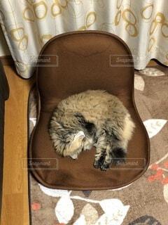 猫,動物,屋内,寝相,もふもふ