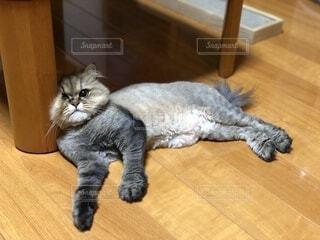 猫,動物,屋内,床,激突