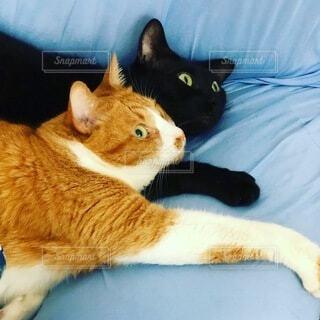 猫,癒し,くつろぎ