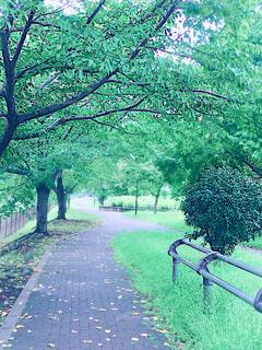 自然,木,屋外,緑,綺麗,癒し