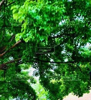 空,夏,木,屋外,緑,帰り道,動画,真夏の空,蝉の声を聞きながら