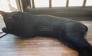 犬,猫,動物,屋内,かわいい,黒,室内,窓,景色,床,黒猫,木目,動画,猫動画