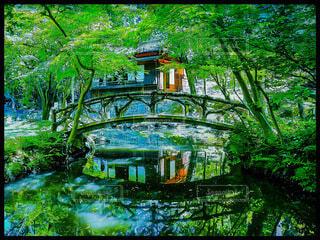 新緑と橋の風景の写真・画像素材[4155795]