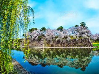 水面に反射する城壁の満開の桜の写真・画像素材[4155824]