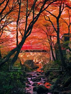 もみじの朱色に染まる川の写真・画像素材[4160785]