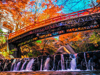 赤い橋と紅葉の写真・画像素材[4160925]