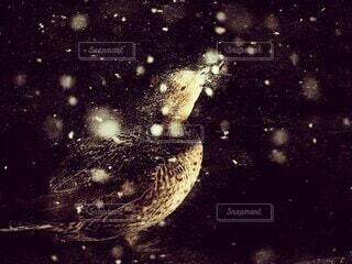 雪の降る夜にの写真・画像素材[4230838]