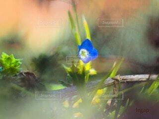 春の訪れを告げる花の写真・画像素材[4232298]