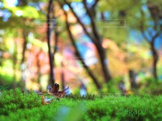 落ち葉のある風景の写真・画像素材[4232334]