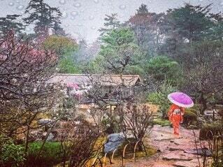 赤い着物で庭園散策の写真・画像素材[4232685]