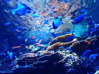 熱帯の海の写真・画像素材[4235286]