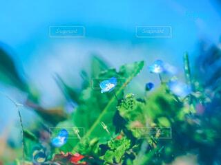小さな青い花の写真・画像素材[4235328]