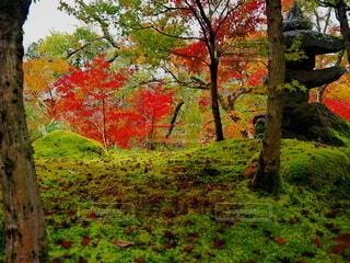 紅葉の進む庭園の写真・画像素材[4235441]