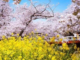 春の風景の写真・画像素材[4330740]