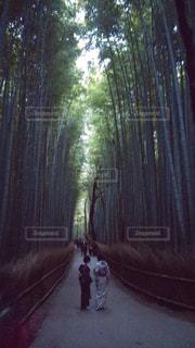 京都の写真・画像素材[175190]