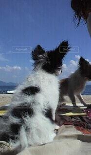青い空の下で水辺を見つめる犬の写真・画像素材[4124273]