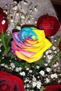 花,屋内,かすみ草,赤,花束,カラフル,バラ,薔薇,草木,一本