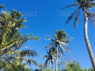 風景,海,空,夏,屋外,海外,緑,青,青い空,海岸,景色,日差し,観光,樹木,ヤシの木,草木,パーム,ヤシ目