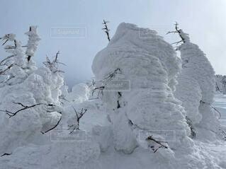 自然,空,冬,木,雪,屋外,雲,氷,雪だるま,スキー,風,スノボ,ゲレンデ,スキー場,冷たい,モンスター,スノーマン,樹氷,蔵王,1月,冷凍,2月,スノーモンスター,冬の東北