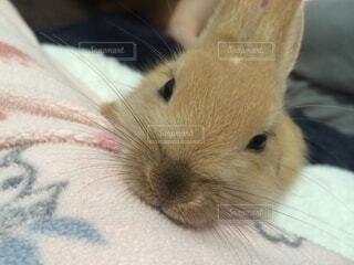 動物,屋内,かわいい,ウサギ,バニー