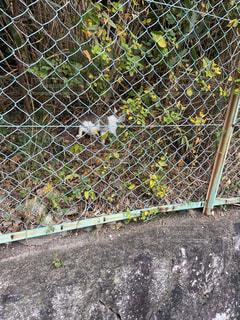 猫,屋外,フェンス