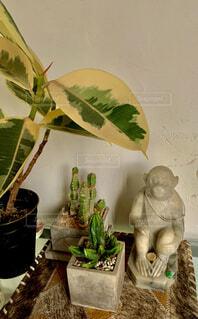 屋内,花瓶,植木鉢,観葉植物,草木,アジア 石像 猿 多肉植物 観葉植物 大理石