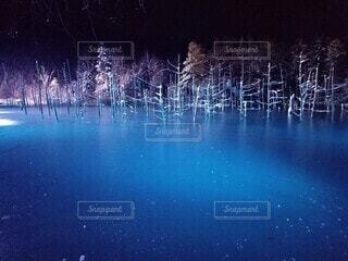 冬,夜,屋外,湖,水面,樹木,明るい