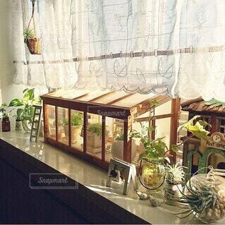 インテリア,春,屋内,花瓶,窓,ミニチュア,家,植木鉢,温室,観葉植物,装飾,さわやか,出窓,エアプランツ,出窓インテリア,温室ディスプレイ,出窓ディスプレイ
