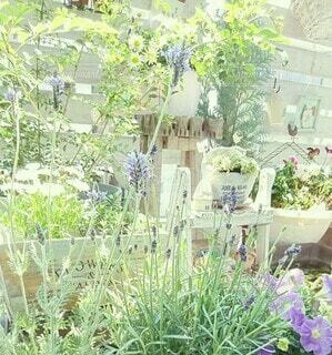 花,春,屋外,草原,ラベンダー,光,ガーデニング,草,家,植木鉢,野原,風,観葉植物,初夏,さわやか,草木,ビオトープ,ガーデン,むらさき,ラベンダー畑,やさしい光,ベランダガーデン,おうち時間,ガーデニング雑貨,ステイホーム