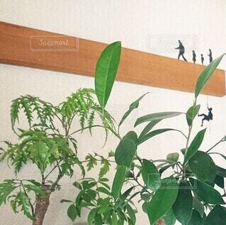 植木鉢,観葉植物,草木,ウォールステッカー,リメイクシート,壁面ディスプレイ