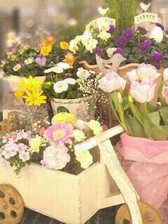 春のベランダガーデンの写真・画像素材[4184580]