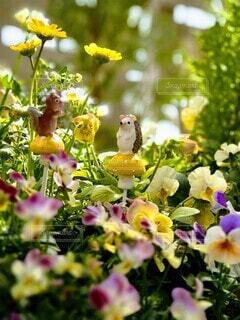 花の中の動物たちの写真・画像素材[4346085]