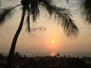 空,屋外,太陽,ビーチ,雲,夕暮れ,水面,水平線,樹木,ヤシの木,日の出,日の入り,草木,パーム,ヤシ目