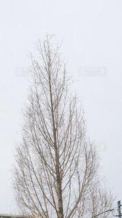 空,雪,屋外,霧,樹木