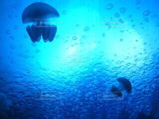 魚,水族館,水面,葉,水中,神秘的,クラゲ,ダイビング,海獣,アクア,海洋生物学