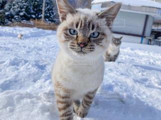 猫,雪,かわいい,野良猫,猫目線