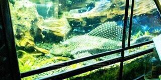 動物,魚,水,水族館,アクアリウム,水槽