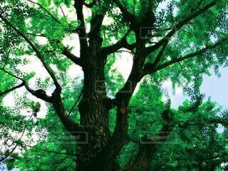 繁る大樹の写真・画像素材[4176253]